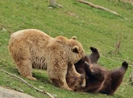 Dels óssos del Pirineu