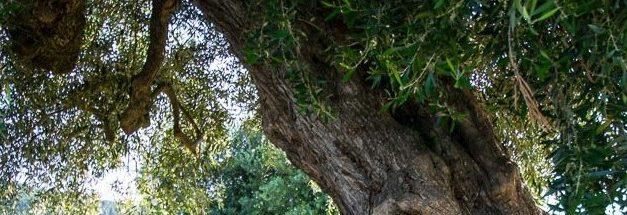 De l'arbre i del bosc